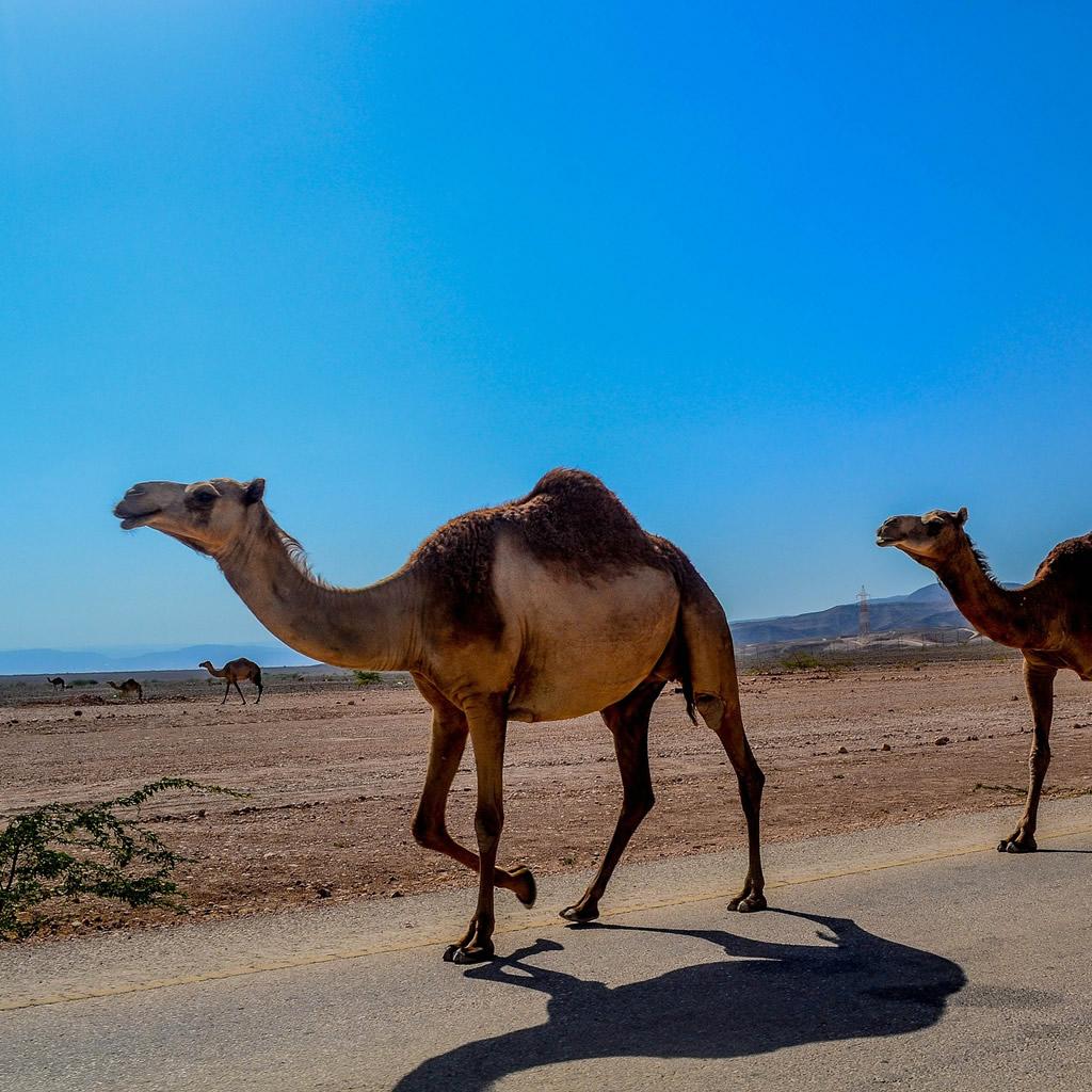 Luxusný rezort v Saudskej Arábii bude postavený pod zemou na púšti!