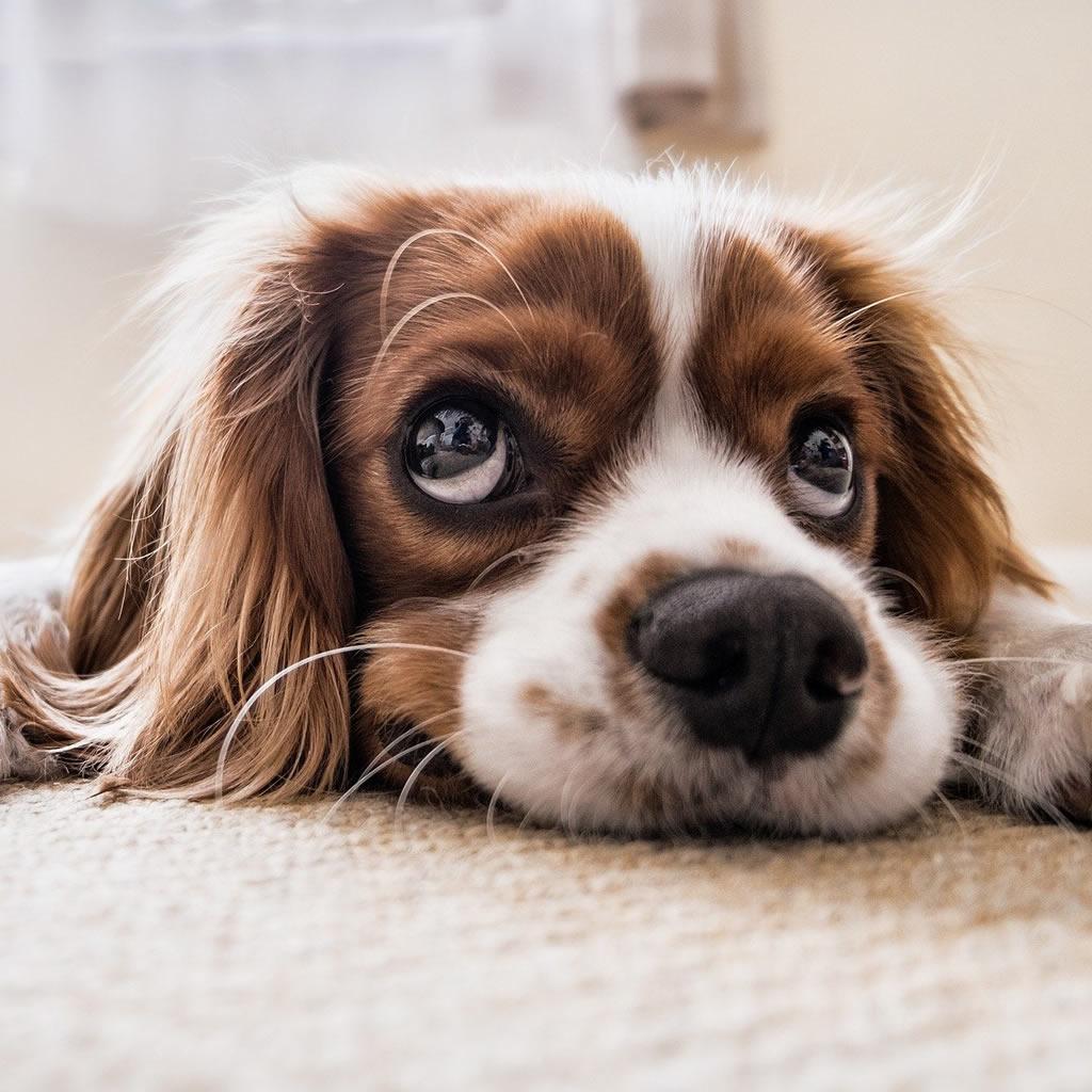 Poistenie liečebných nákladov vášho zvieratka: Na čo máte nárok?