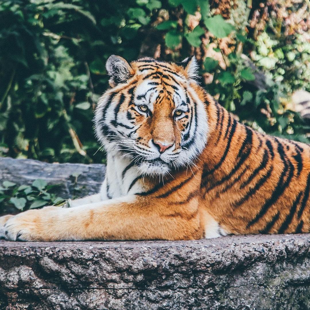 Slovenské zoologické záhrady otvárajú brány. Zisťovali sme, čo ponúknu svojim návštevníkom