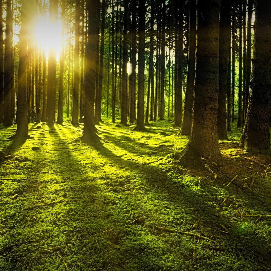 Tatry a Pieniny budú zelenšie. Vysadia tam 300 000 stromčekov