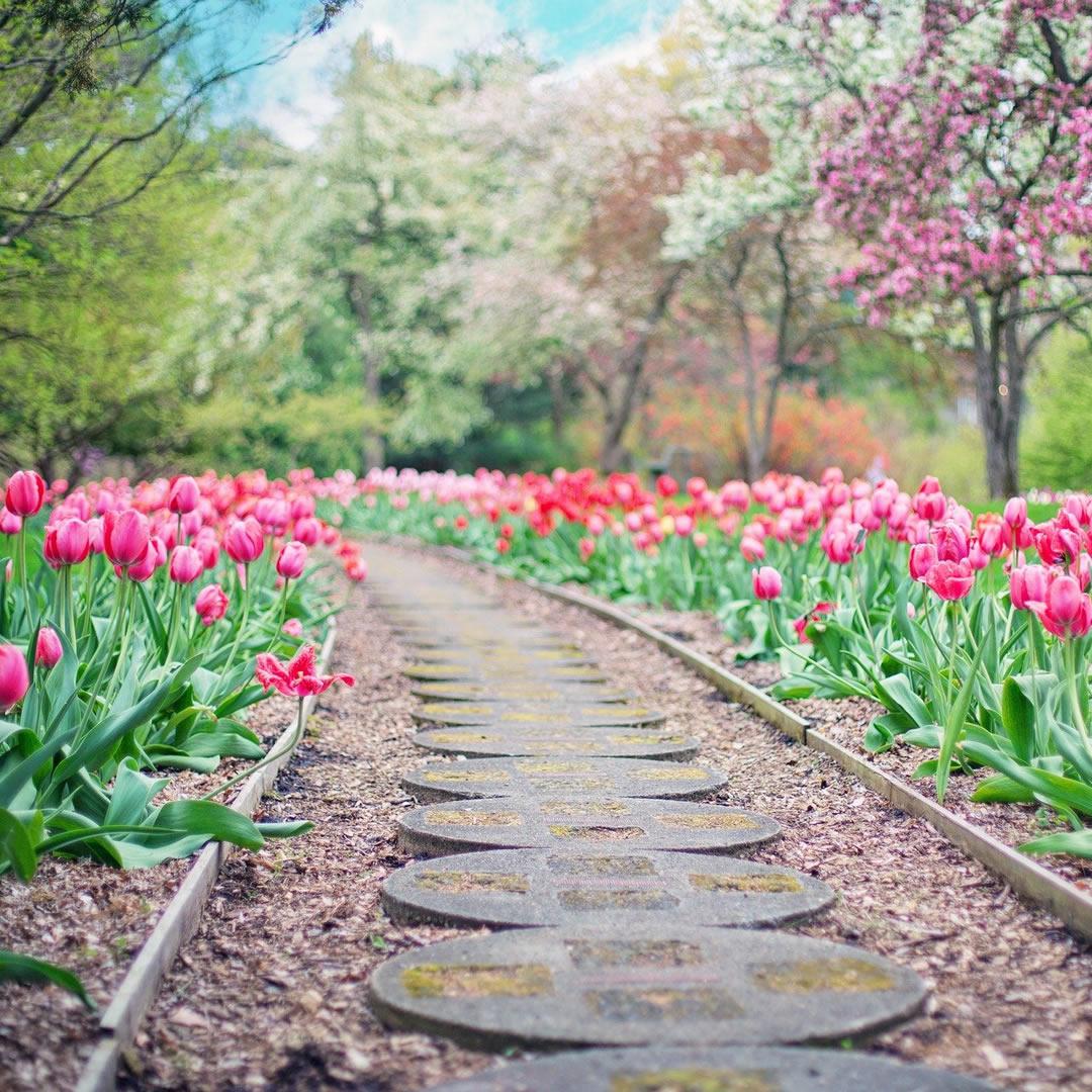 Dnes si pripomíname Deň tulipánov. Viažu sa k nemu aj tieto zaujímavosti!