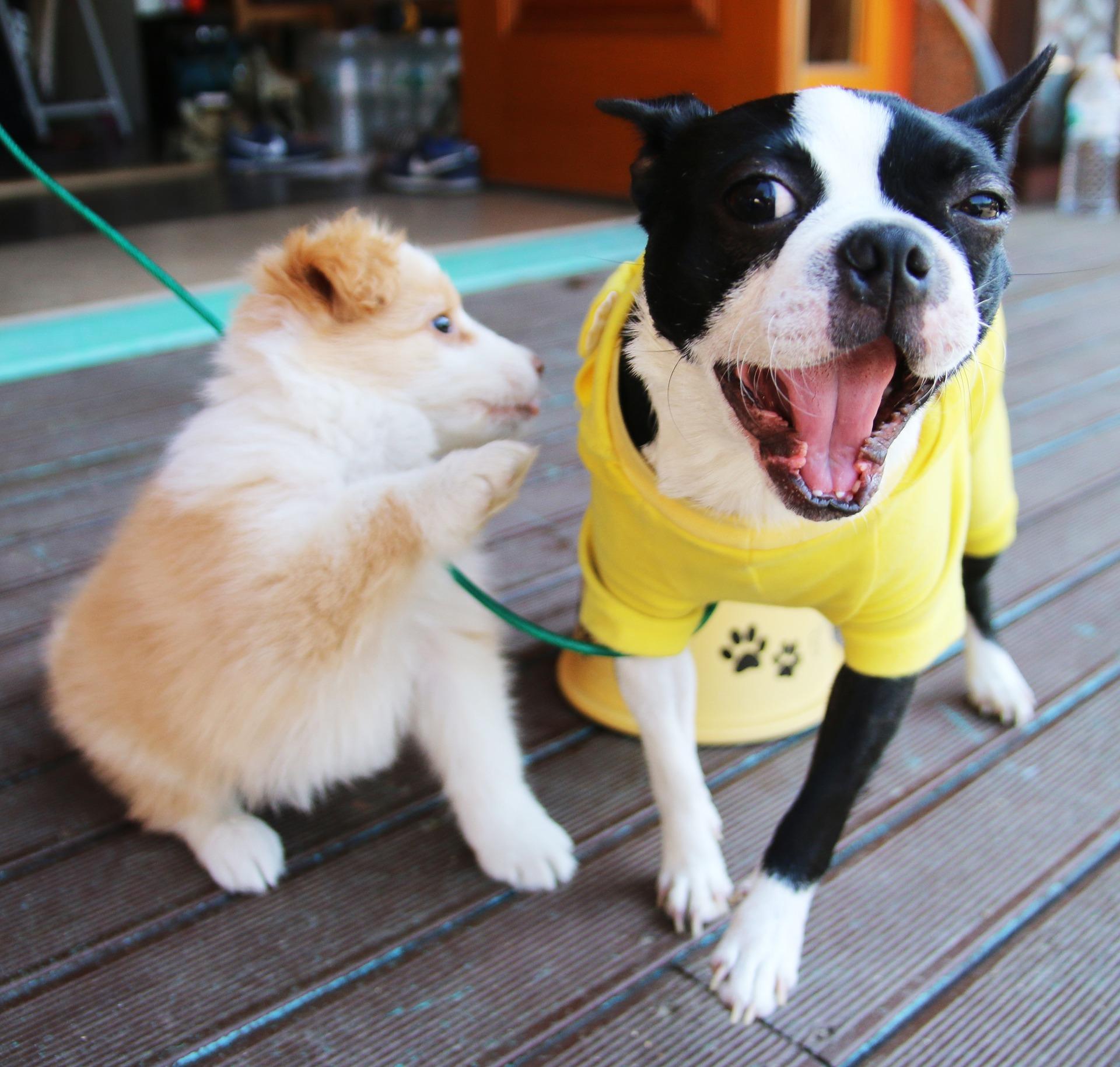Dobré správy pre všetkých psíčkarov. Ich miláčikovia dostanú v hoteloch originálny bonus!