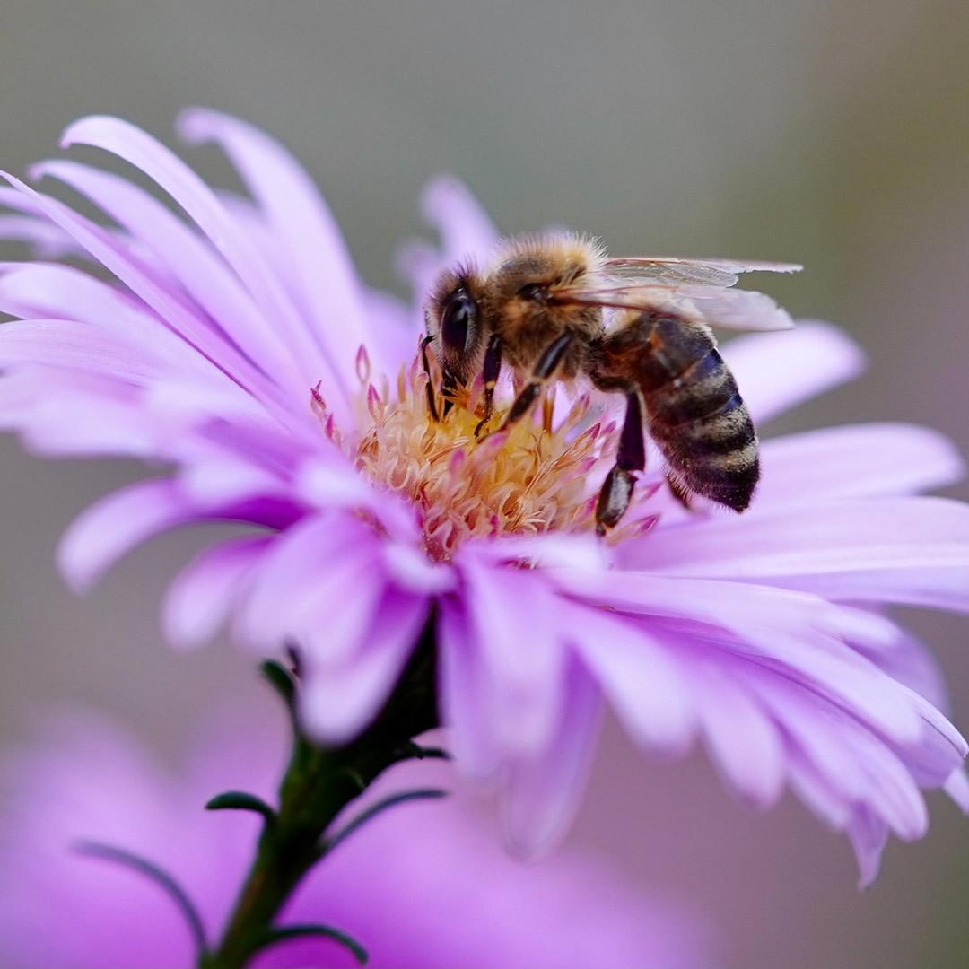 Prečo sú včely dôležité pre ľudstvo a o týchto zaujímavostiach ste vedeli?