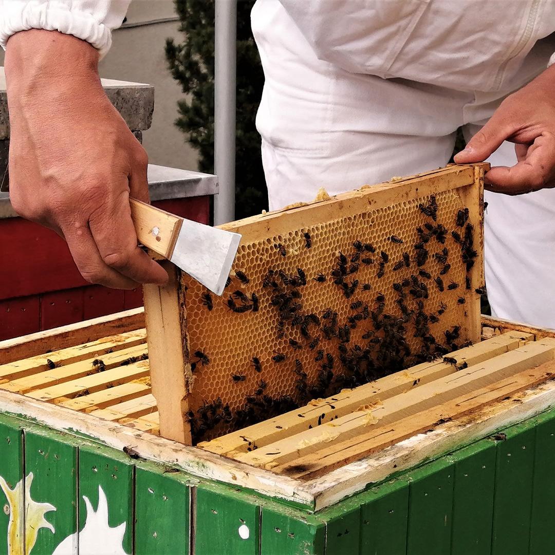 Nový trend v hotelierstve? Hotely stavajú úle a vyrábajú vlastný med