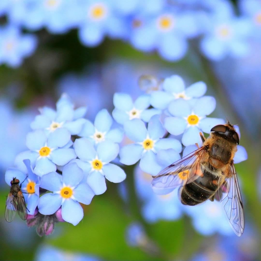 Med nad zlato? Navštívte Trnavský včelársky festival už TENTO víkend a dozviete sa odpoveď