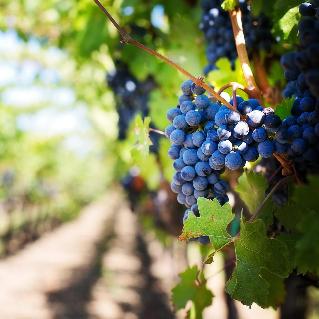 Máme tu obdobie vinobraní a jarmokov! Už tento víkend odštartovali prvé z nich