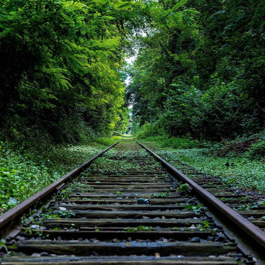 Lesné železničky sú jedným z najkrajších turistických zážitkov. Viete, na aký účel pôvodne vznikali?