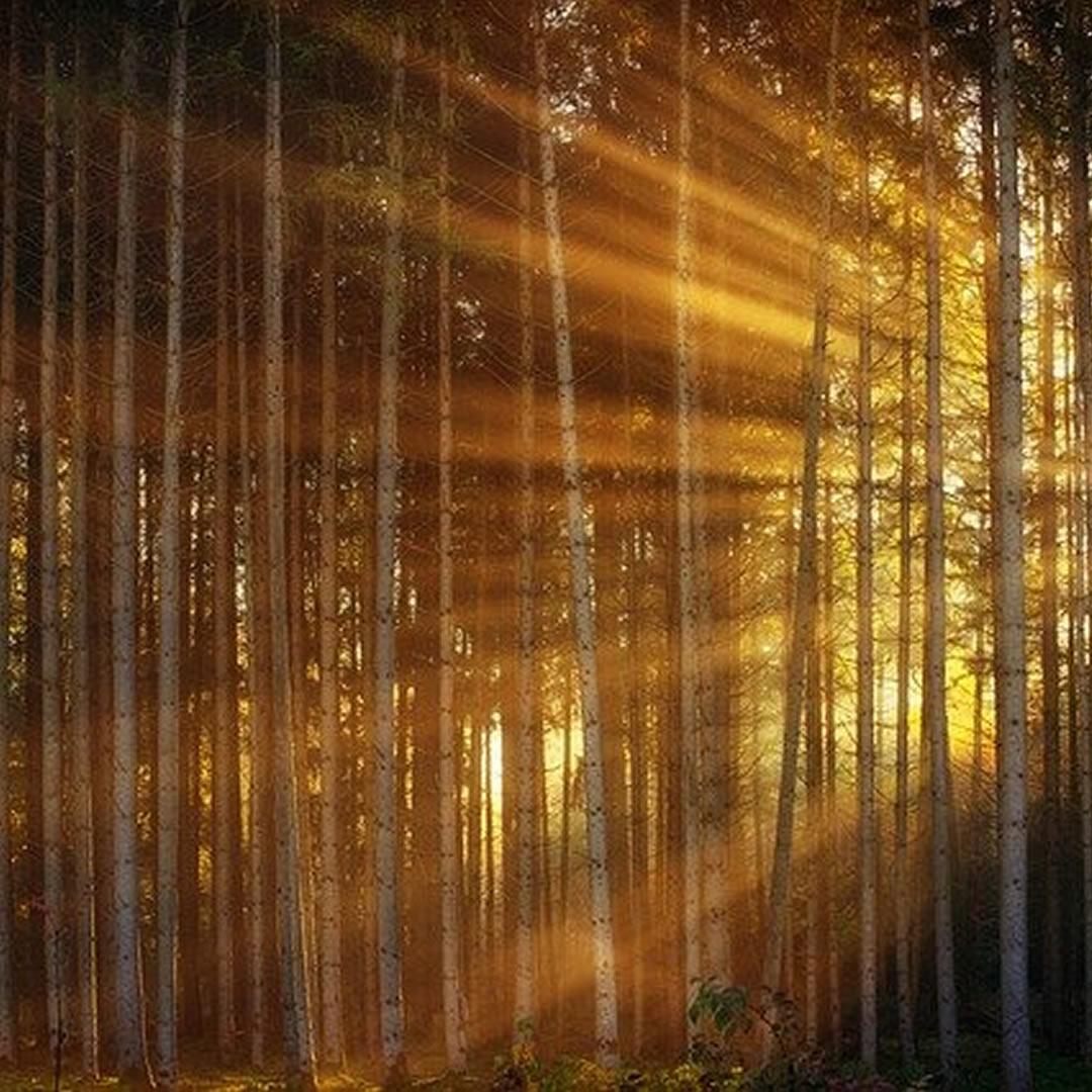 Celodenná prechádzka borovicovými lesmi? Slovenská Sahara je na to ako stvorená. Kde ju nájdete?