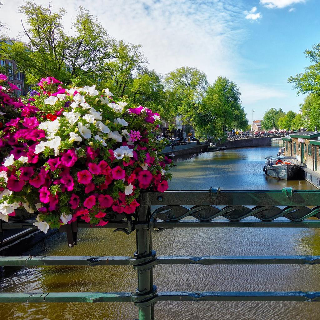 Skvelý tip z Amsterdamu – bezpečné ulice vďaka kvetom